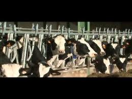 Ce n'est pas un poisson...la fin des quotas laitiers!